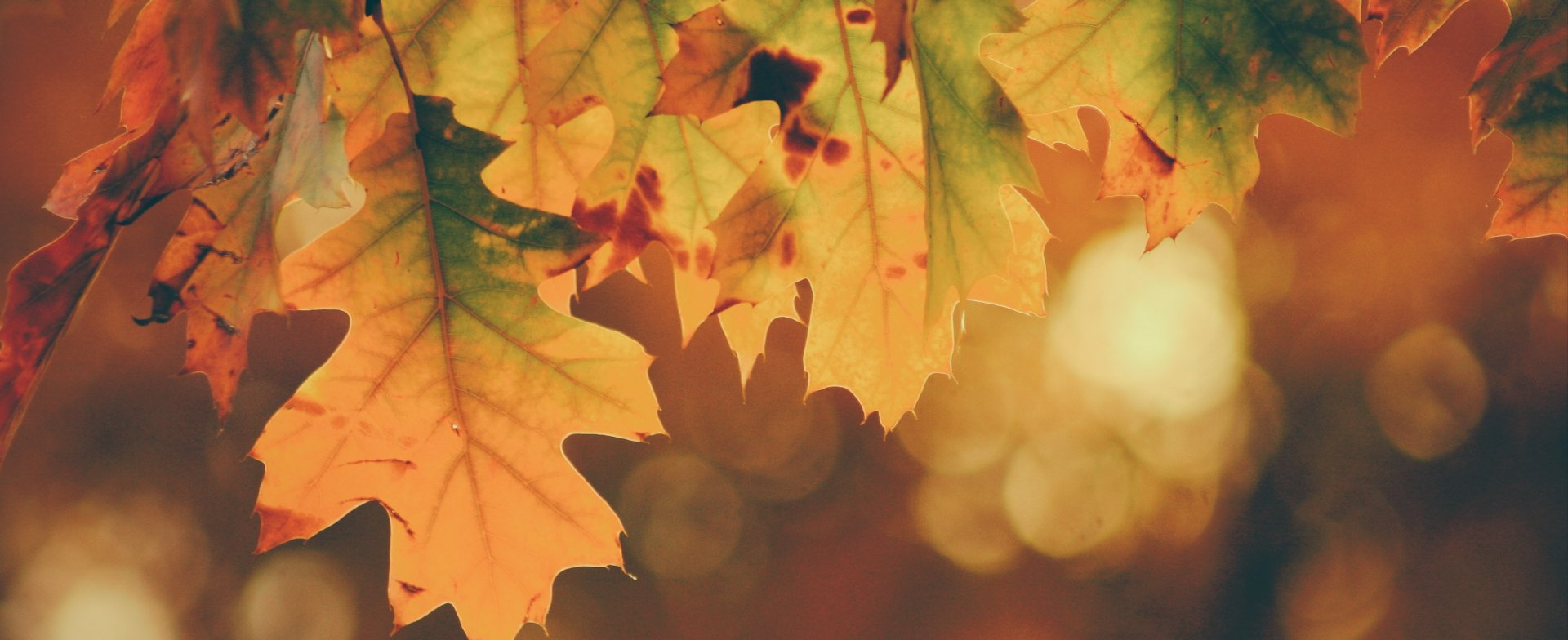 Jesień w domkach