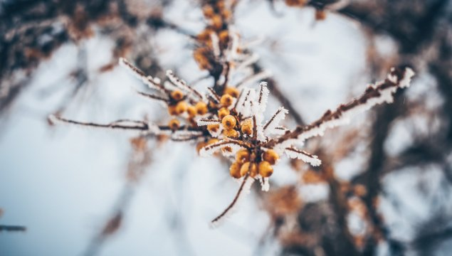 Winter Sanddorn-Erholung