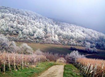 Wein-Wander-Wochenende im Winter