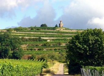 Wanderlust Pfälzer Weinsteig 4 Nächte