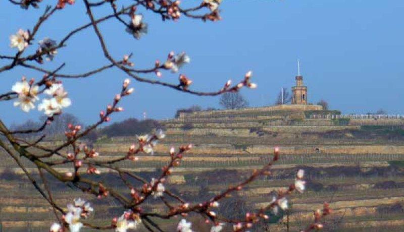 Wertgutschein zum Beispiel für Leben wie Gott in der Pfalz für 2
