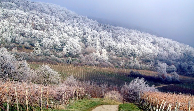 Hike and Wine Weekend in the Wintertime