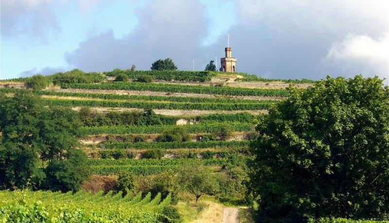Wanderlust - Palatinate