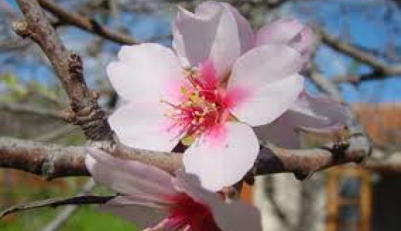 Spring Awakes Feelings 3 Nights