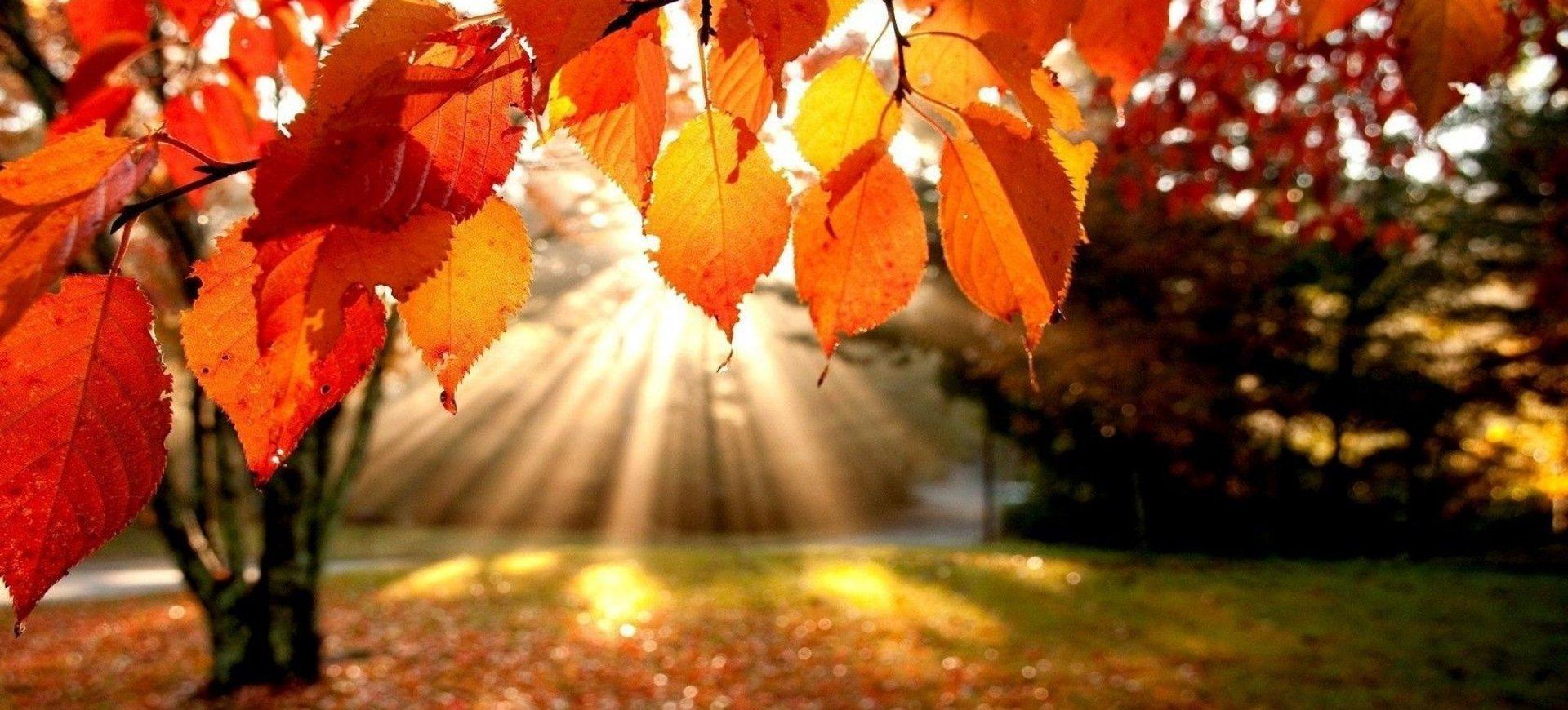 Zdrowie na jesień - 7 nocy