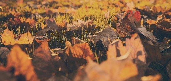 Jesień w Łomży – na skarpie Doliny Narwi