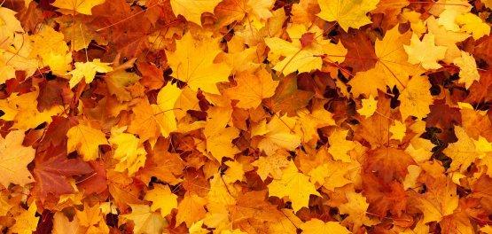 Piła: Oferta Jesienno-Zimowa  -15%