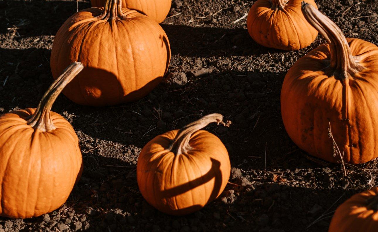 Toruń: Halloween 2021