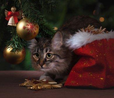 Boże Narodzenie w Augustowie Pobyt świąteczny (23-26.12.2019)