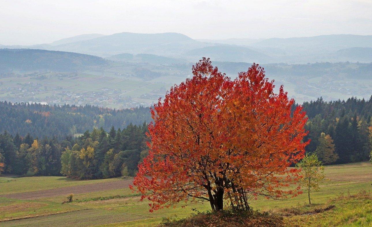 Krynica-Zdrój: Jesień w Beskidach