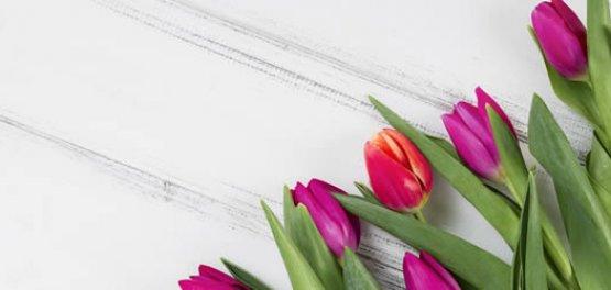 Copy_Copy_Copy_Krynica-Zdrój: Spring 2020