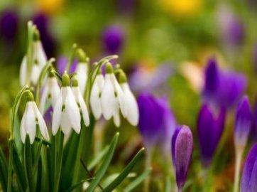 Wiosna tuż tuż ...