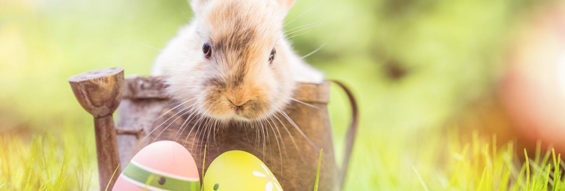 Wielkanoc na Mazurach